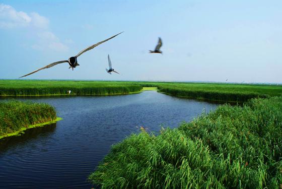 安达湿地2.jpg
