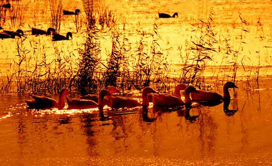 红湖湿地.jpg